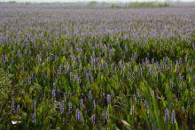 UF Stock Photo, Wetlands
