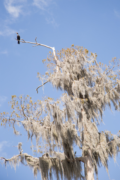 UF Stock Photo, Bird in Tree