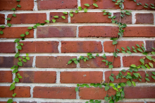 UF Stock Photo, Bricks