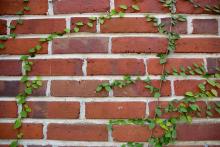 UF Stock Photo, Bricks